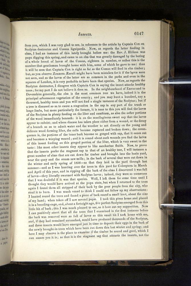 Image of Darwin-F349-1858-Zoologist-v16-06147