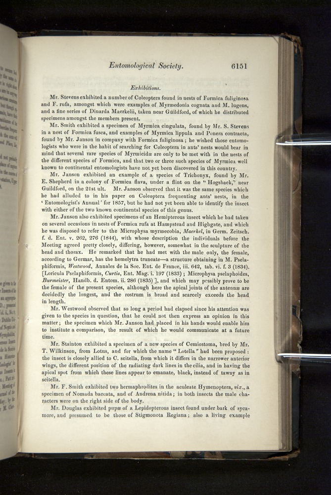 Image of Darwin-F349-1858-Zoologist-v16-06151