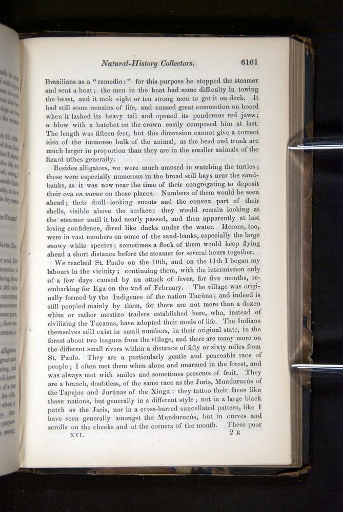 Image of Darwin-F349-1858-Zoologist-v16-06161