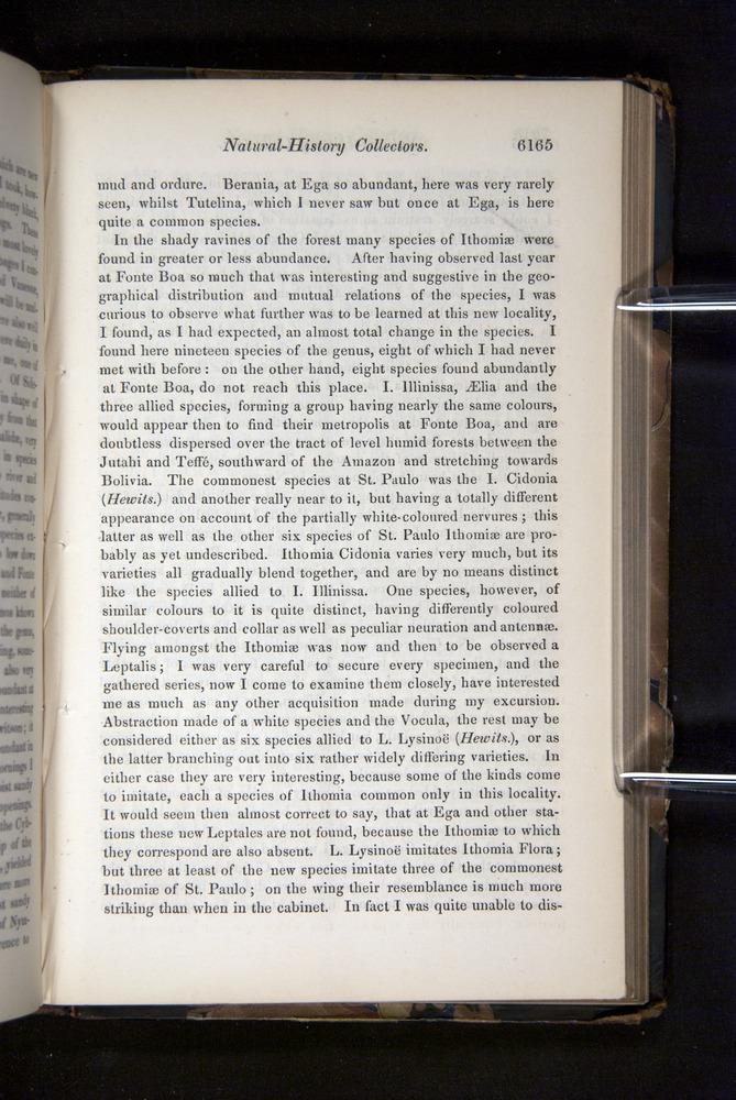 Image of Darwin-F349-1858-Zoologist-v16-06165