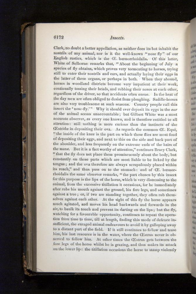 Image of Darwin-F349-1858-Zoologist-v16-06172