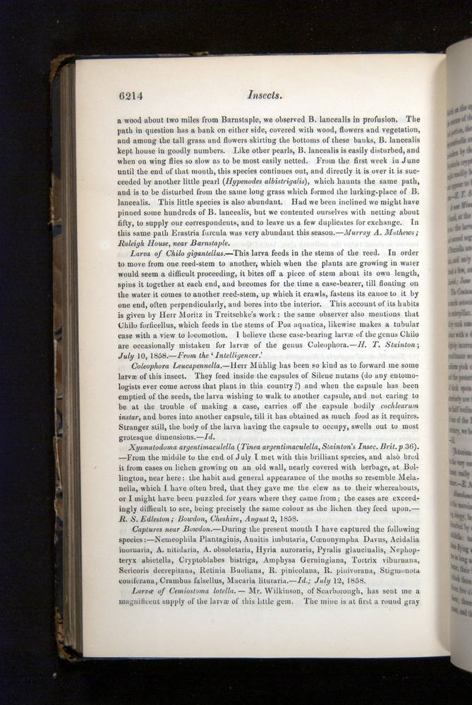 Image of Darwin-F349-1858-Zoologist-v16-06214