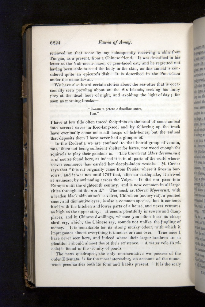 Image of Darwin-F349-1858-Zoologist-v16-06224