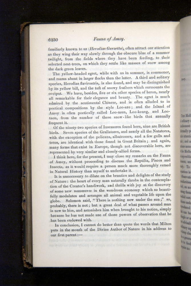 Image of Darwin-F349-1858-Zoologist-v16-06230