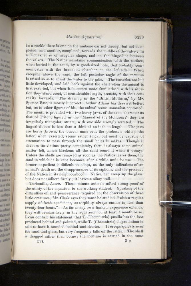 Image of Darwin-F349-1858-Zoologist-v16-06233