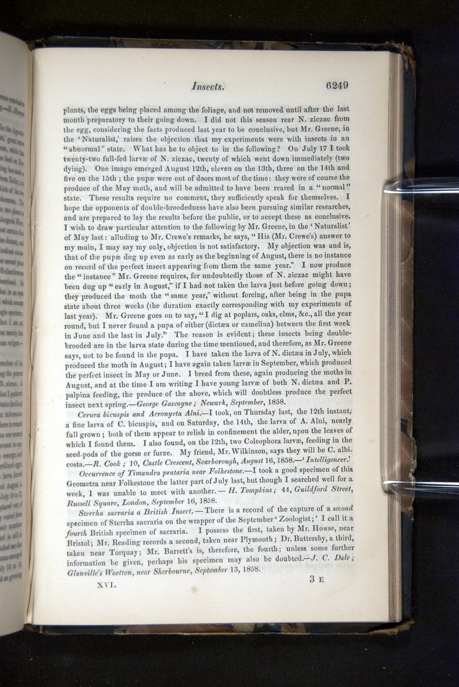 Image of Darwin-F349-1858-Zoologist-v16-06249