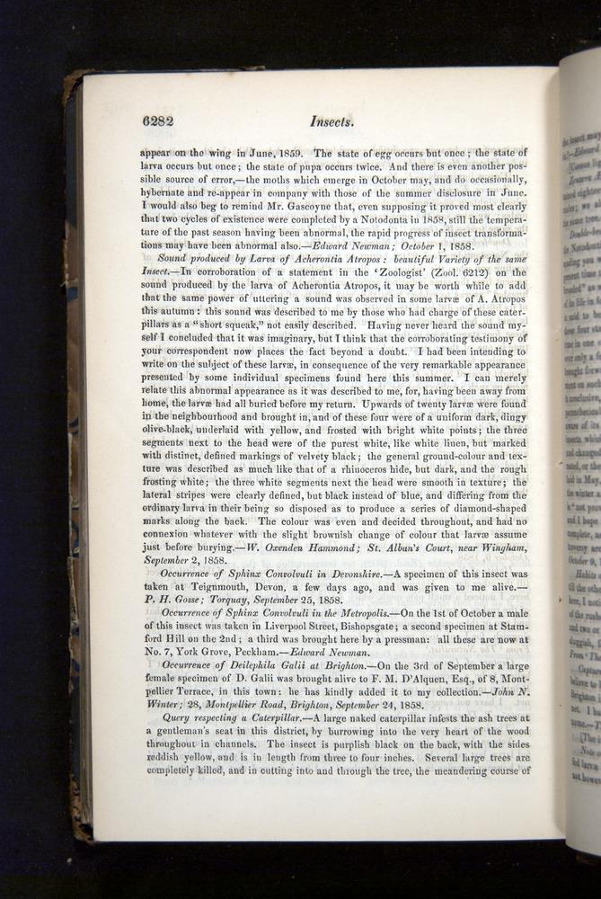 Image of Darwin-F349-1858-Zoologist-v16-06282