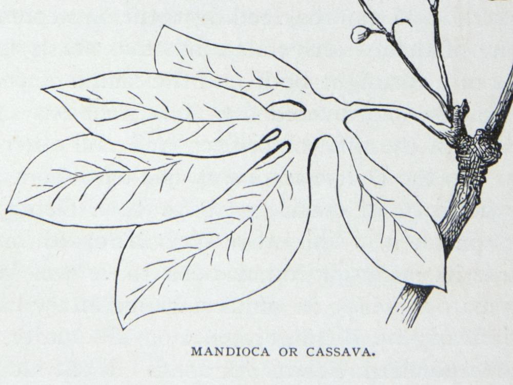 Image of Darwin-F64-1890-zzzz-det-027