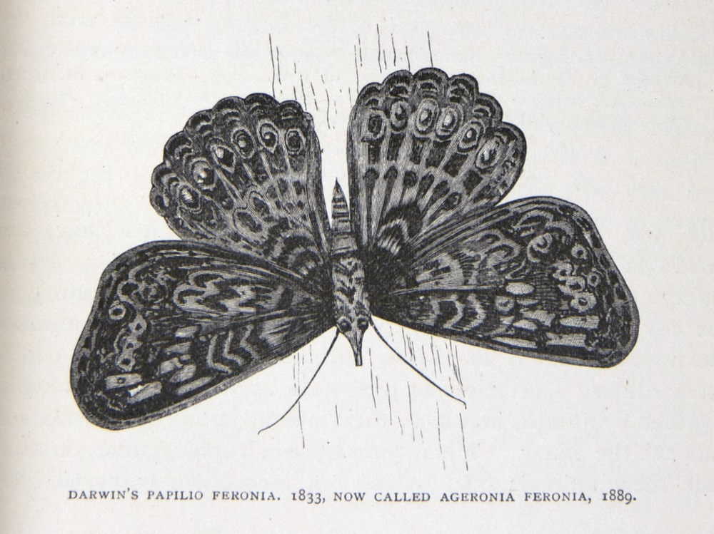 Image of Darwin-F64-1890-zzzz-det-039