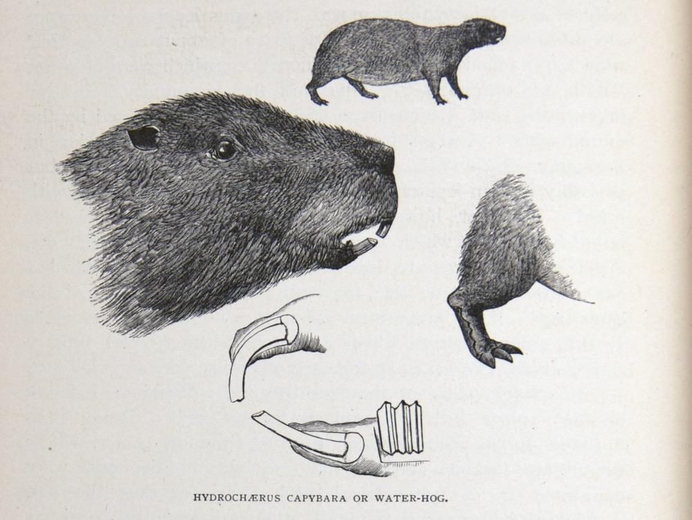 Image of Darwin-F64-1890-zzzz-det-040