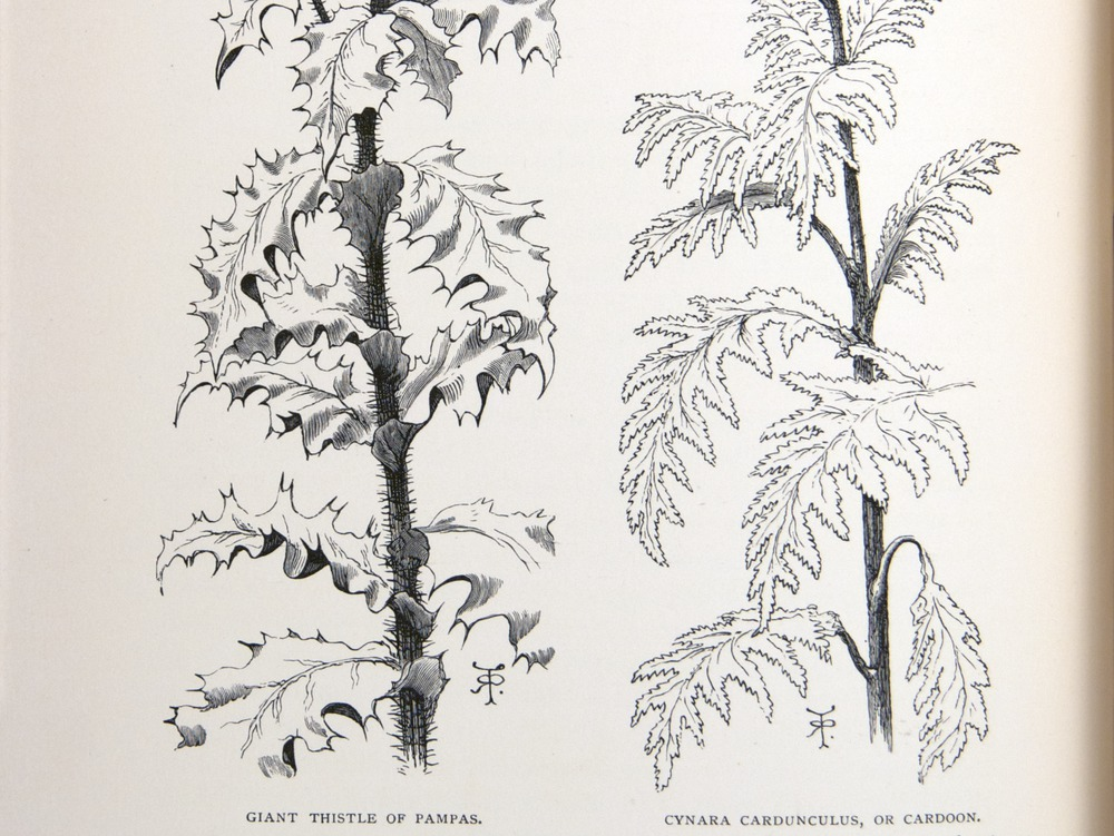 Image of Darwin-F64-1890-zzzz-det-124-f3v