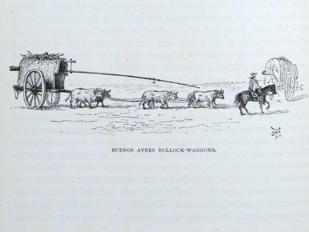 Image of Darwin-F64-1890-zzzz-det-150