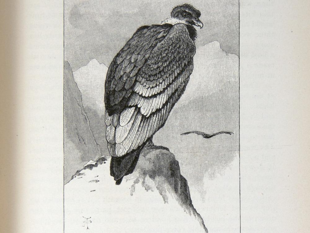 Image of Darwin-F64-1890-zzzz-det-187