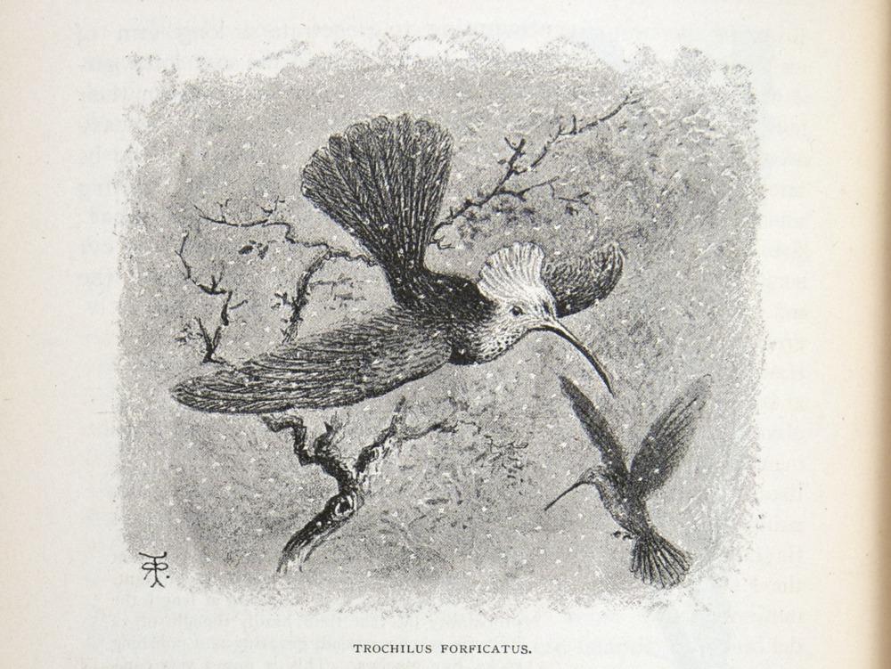 Image of Darwin-F64-1890-zzzz-det-268