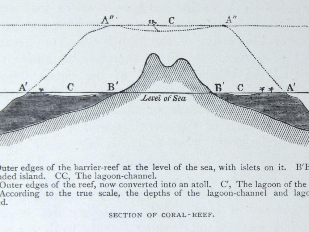 Image of Darwin-F64-1890-zzzz-det-503