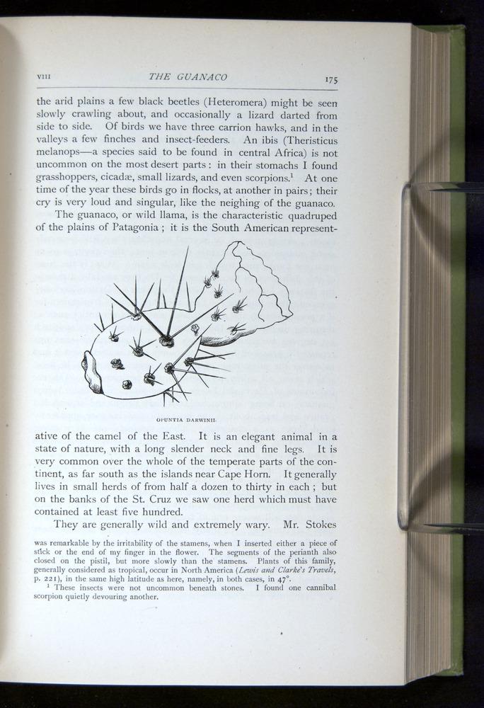 Image of Darwin-F64-1890-175