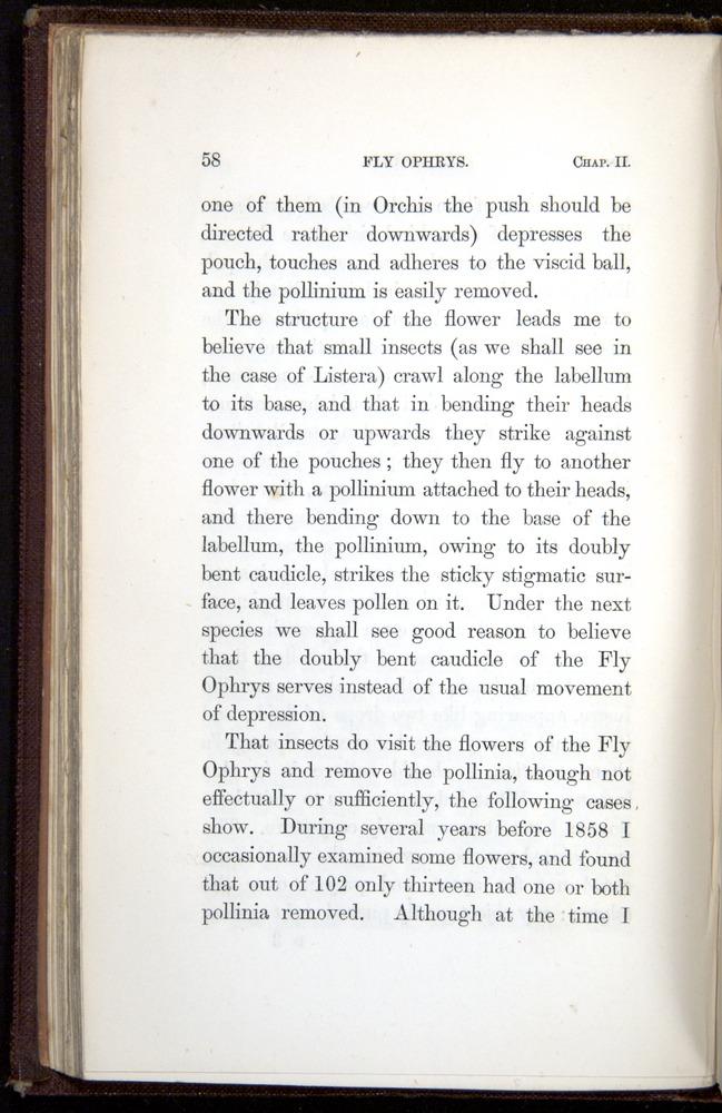 Image of Darwin-F800-1862-00058