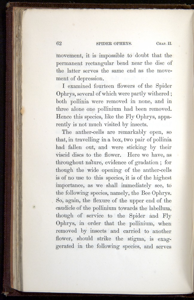 Image of Darwin-F800-1862-00062