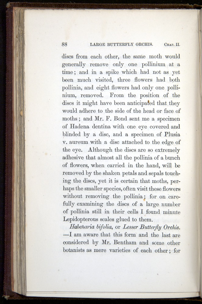 Image of Darwin-F800-1862-00088