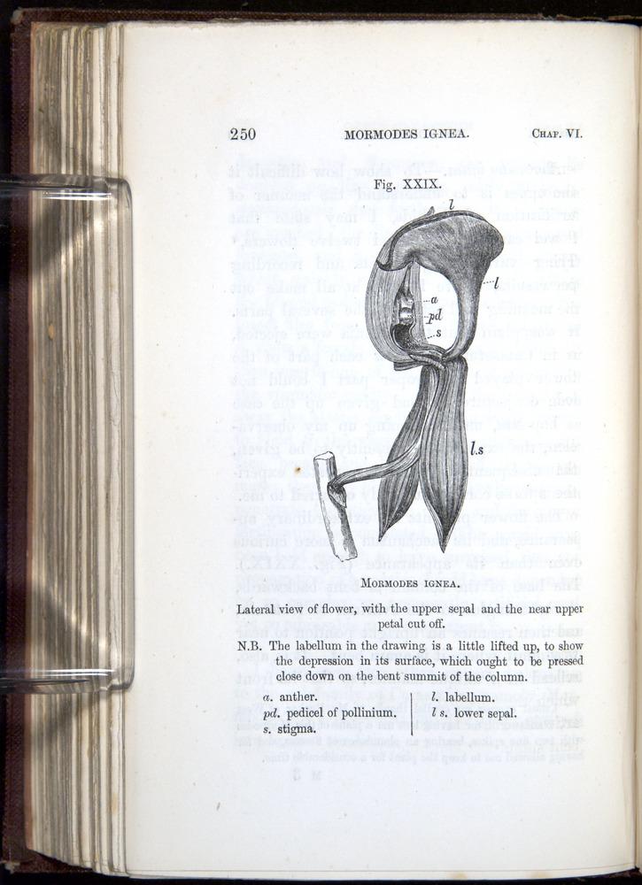 Image of Darwin-F800-1862-00250