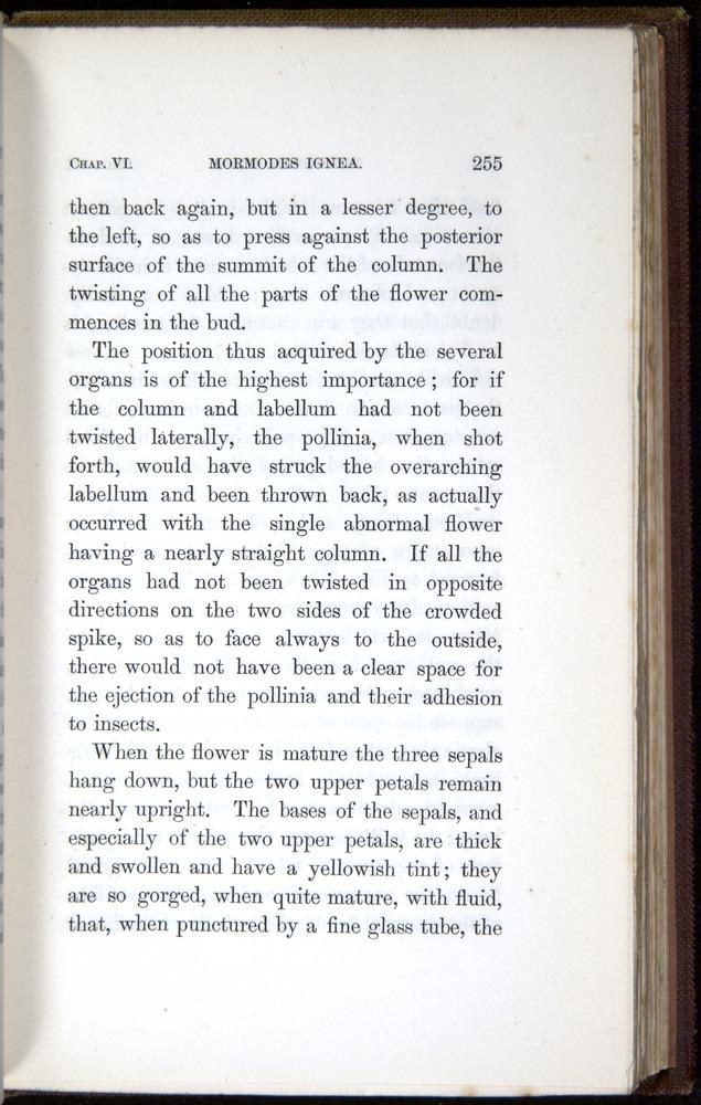 Image of Darwin-F800-1862-00255