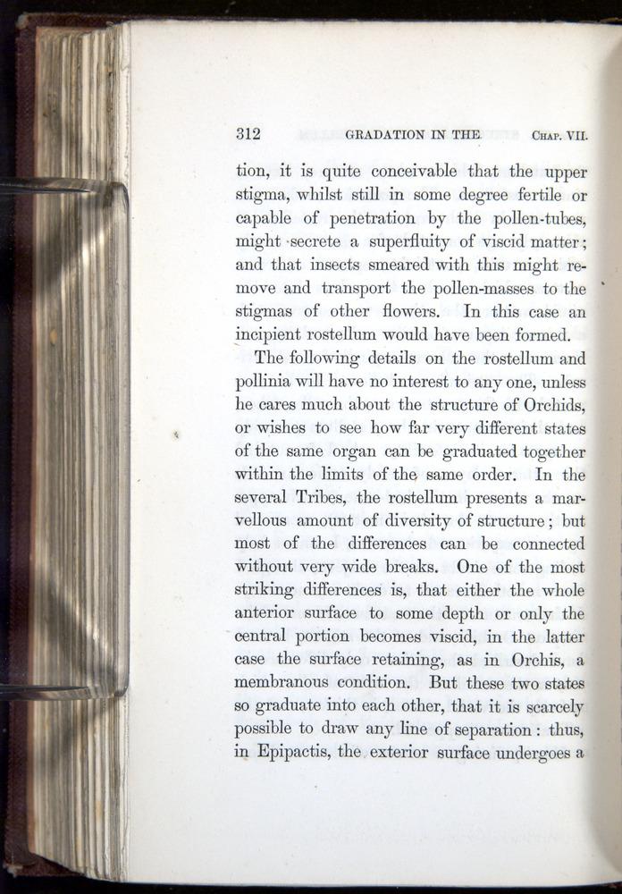 Image of Darwin-F800-1862-00312