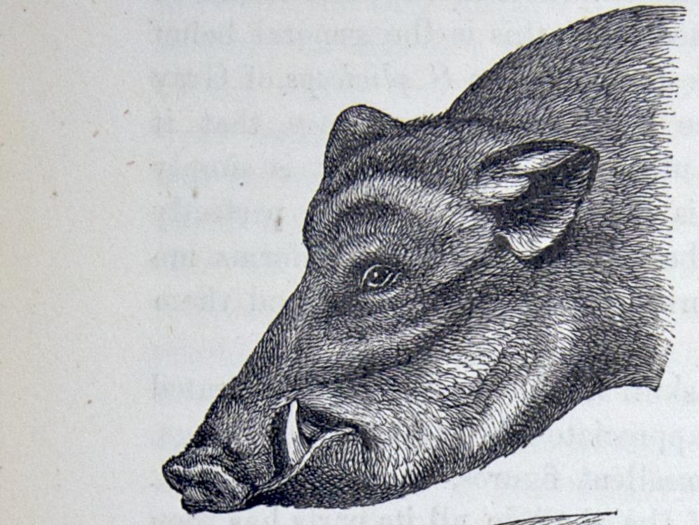 Image of Darwin-F878.1-1868-zzzzzz-det-00072-1