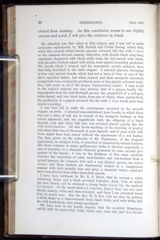 Image of Darwin-F878.2-1868-00040