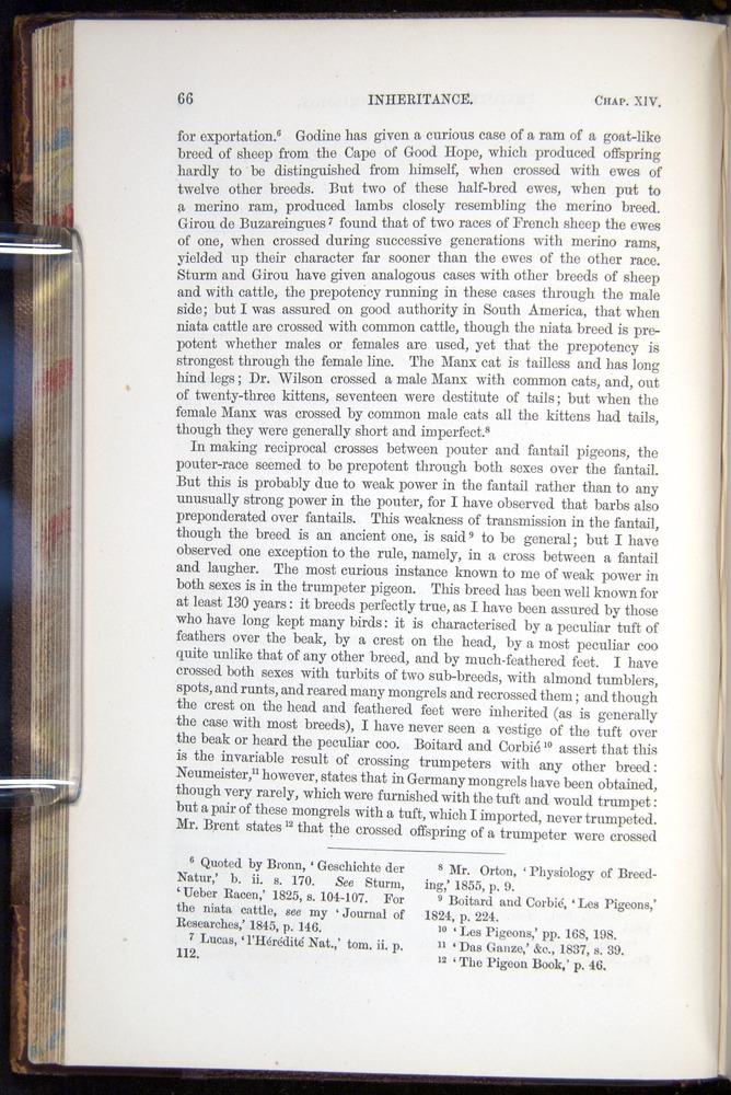 Image of Darwin-F878.2-1868-00066