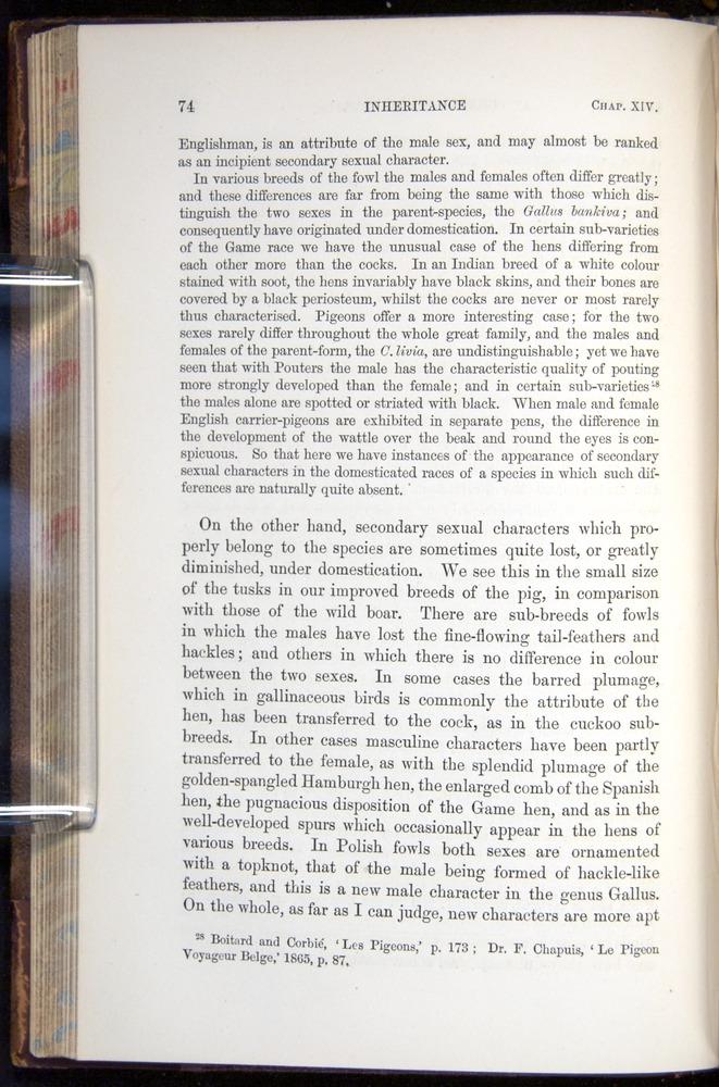 Image of Darwin-F878.2-1868-00074