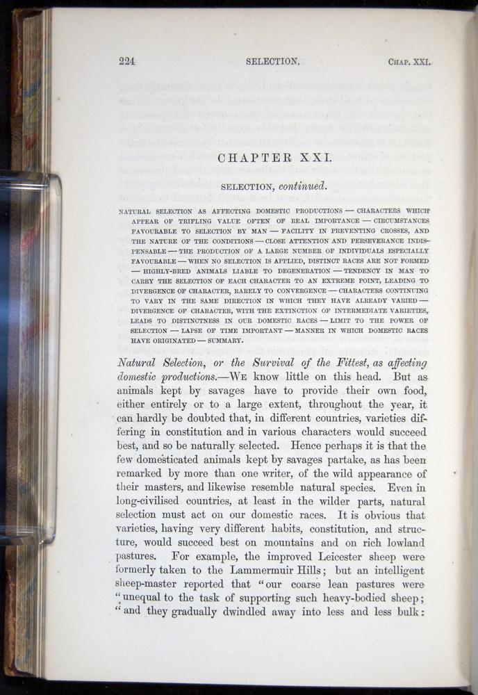 Image of Darwin-F878.2-1868-00224