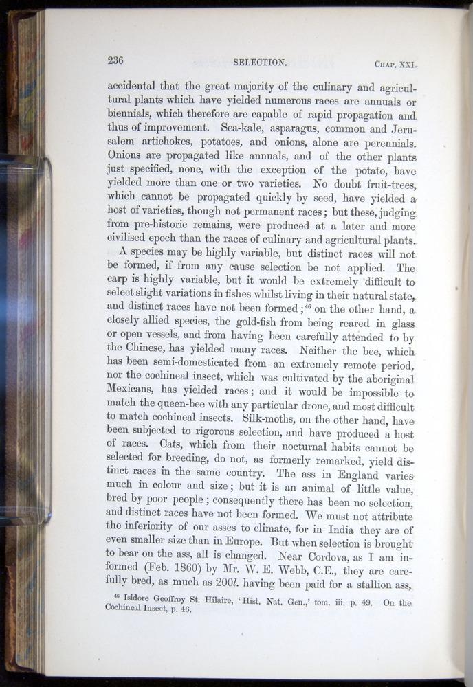 Image of Darwin-F878.2-1868-00236