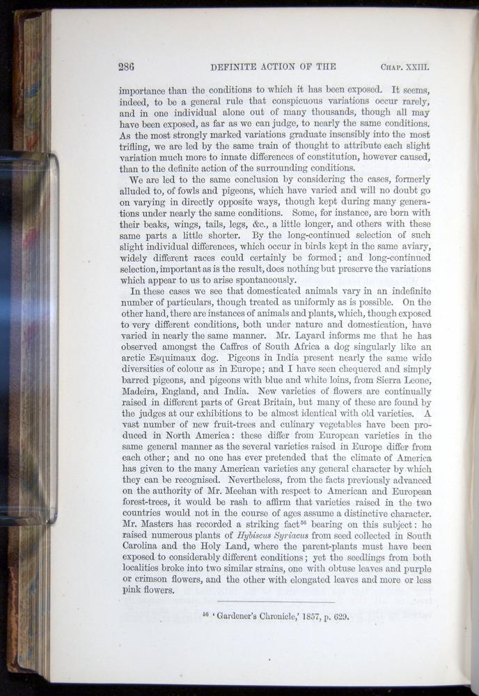 Image of Darwin-F878.2-1868-00286