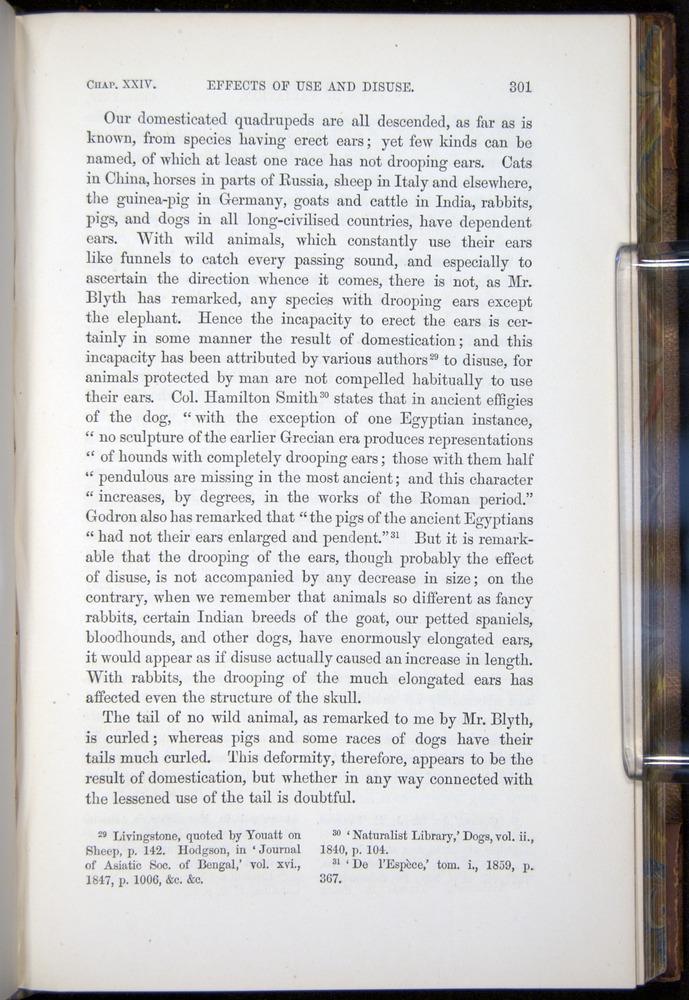 Image of Darwin-F878.2-1868-00301