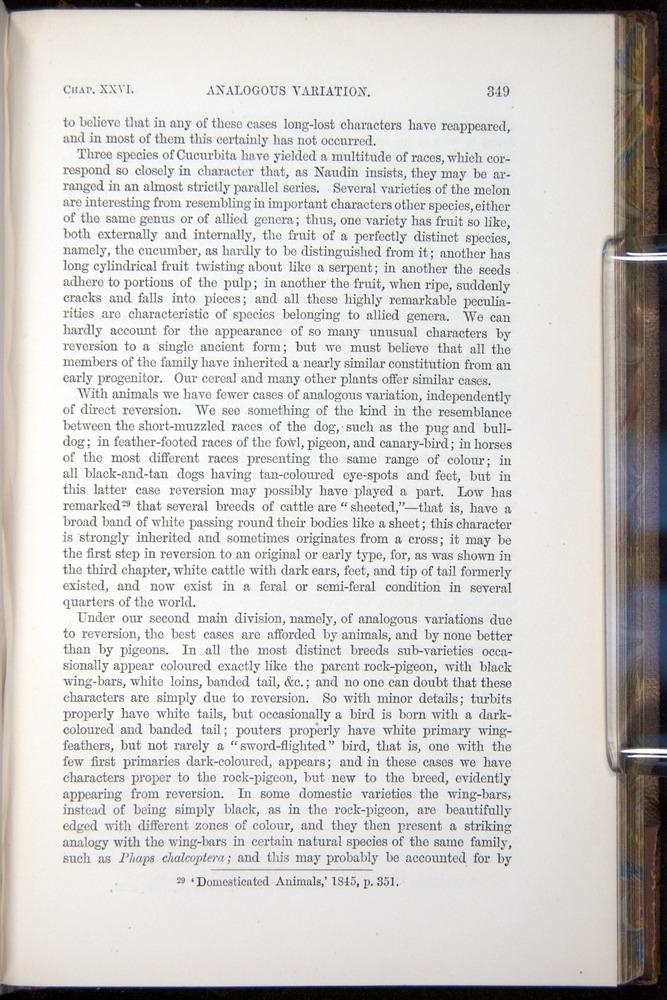 Image of Darwin-F878.2-1868-00349