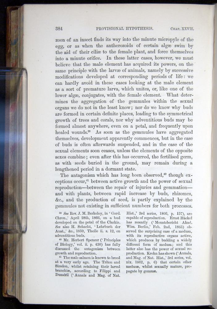 Image of Darwin-F878.2-1868-00384