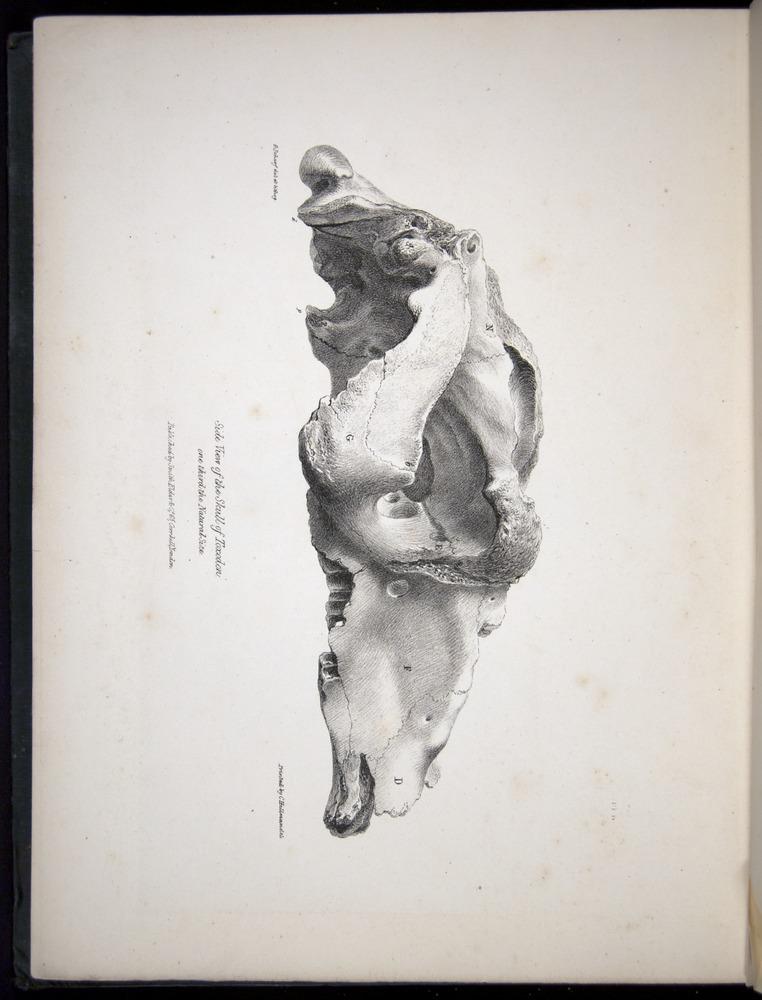 Image of Darwin-F8.1-1838-00112-f02-c