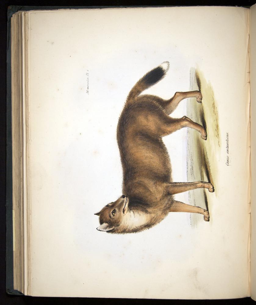 Image of Darwin-F8.1-1838-z0006-f04-b