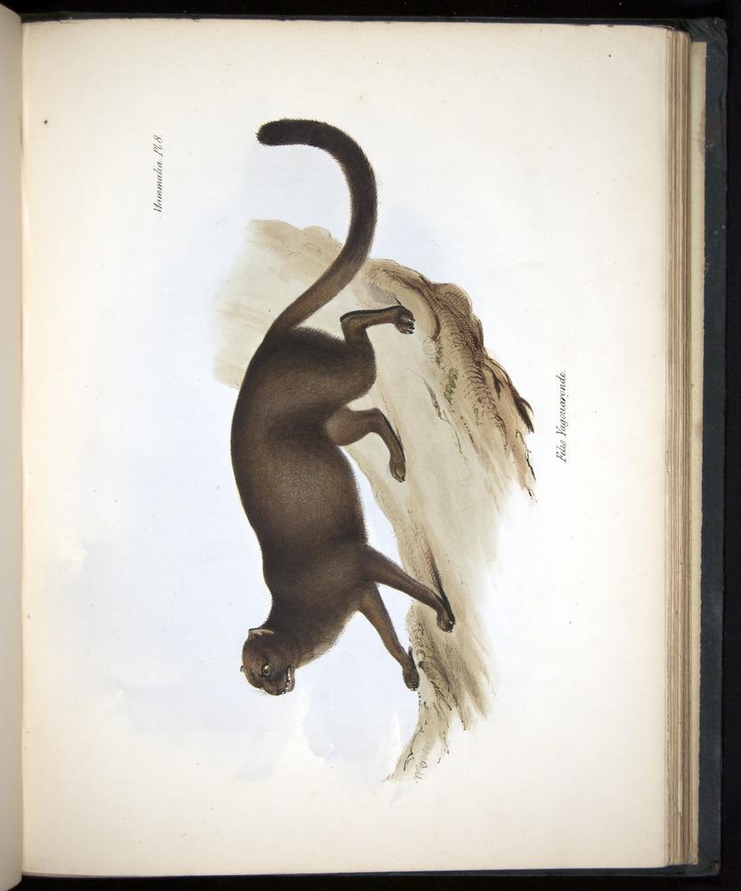 Image of Darwin-F8.1-1838-z0016-f08-c