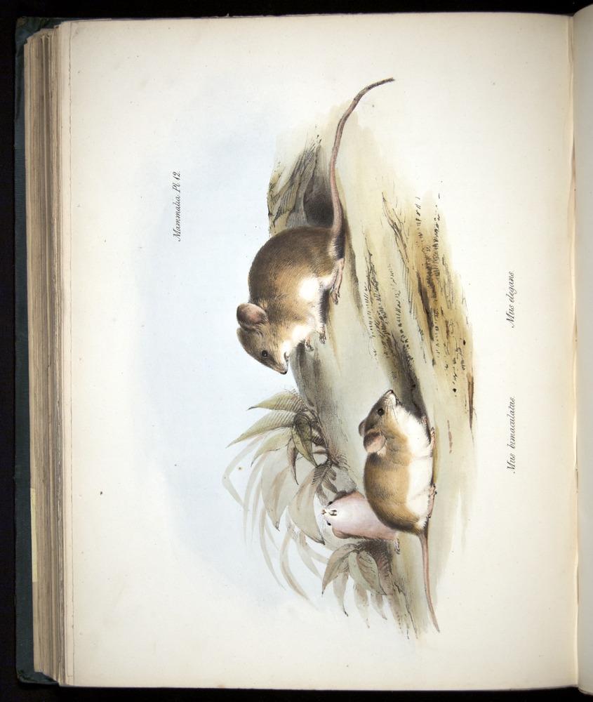 Image of Darwin-F8.1-1838-z0040-f12-b