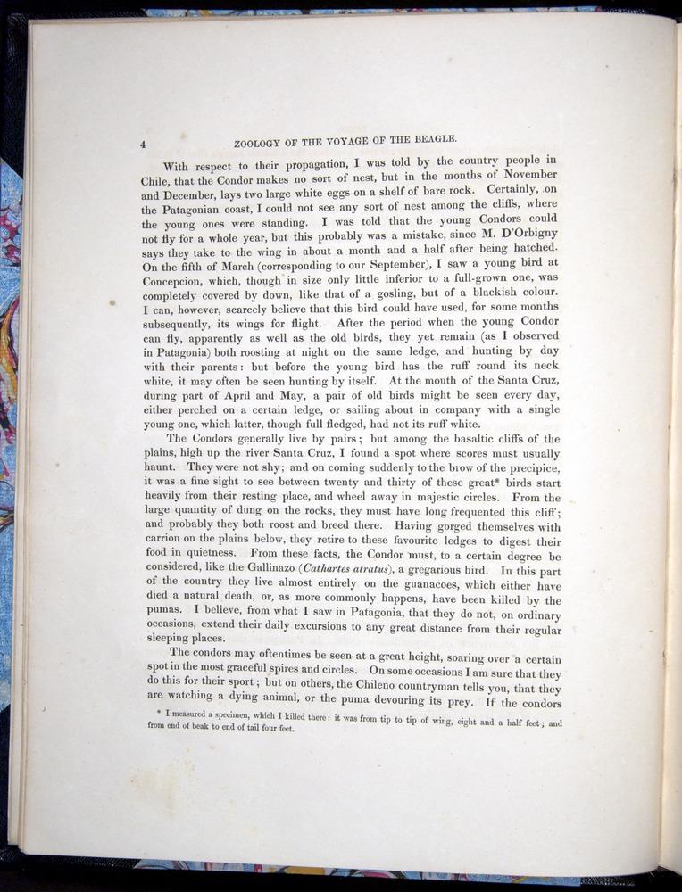 Image of Darwin-F8.2-1838-00004