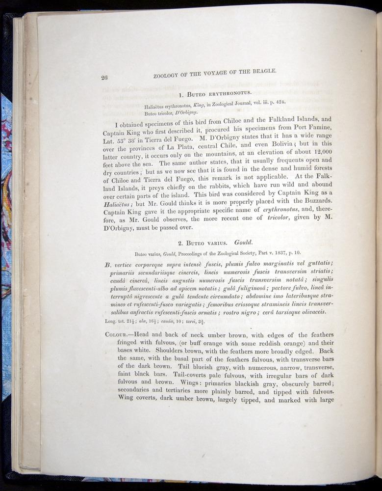 Image of Darwin-F8.2-1838-00026