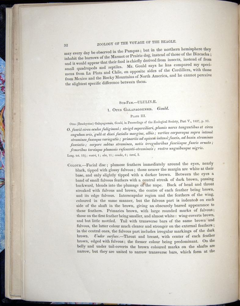 Image of Darwin-F8.2-1838-00032