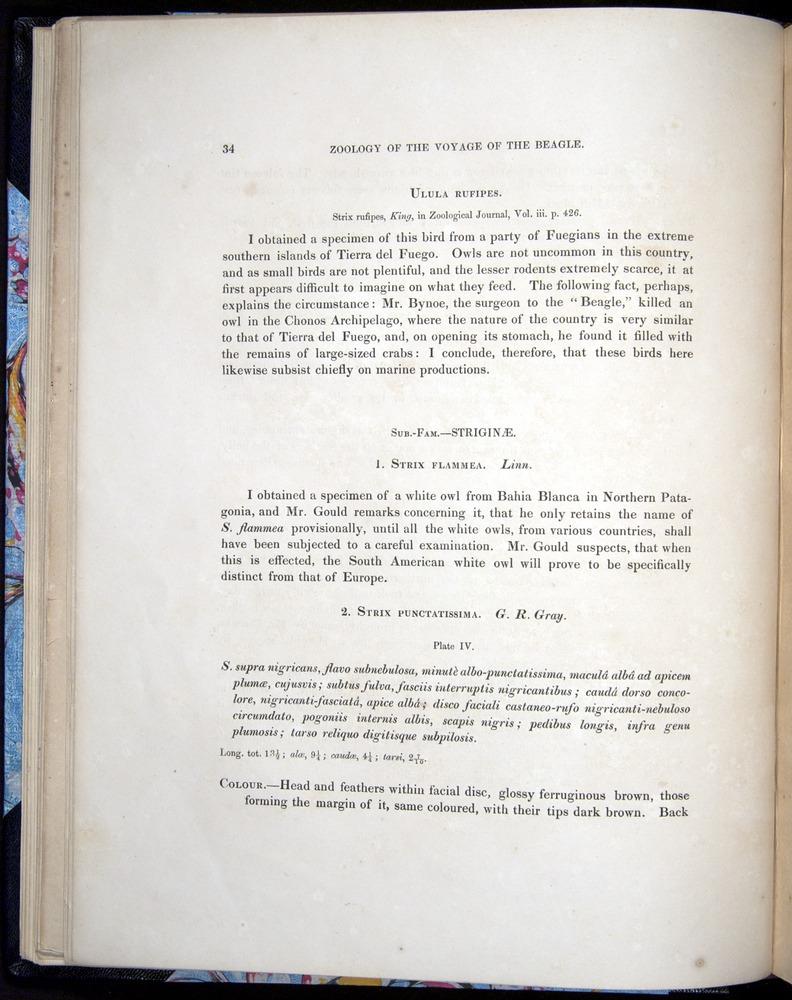 Image of Darwin-F8.2-1838-00034