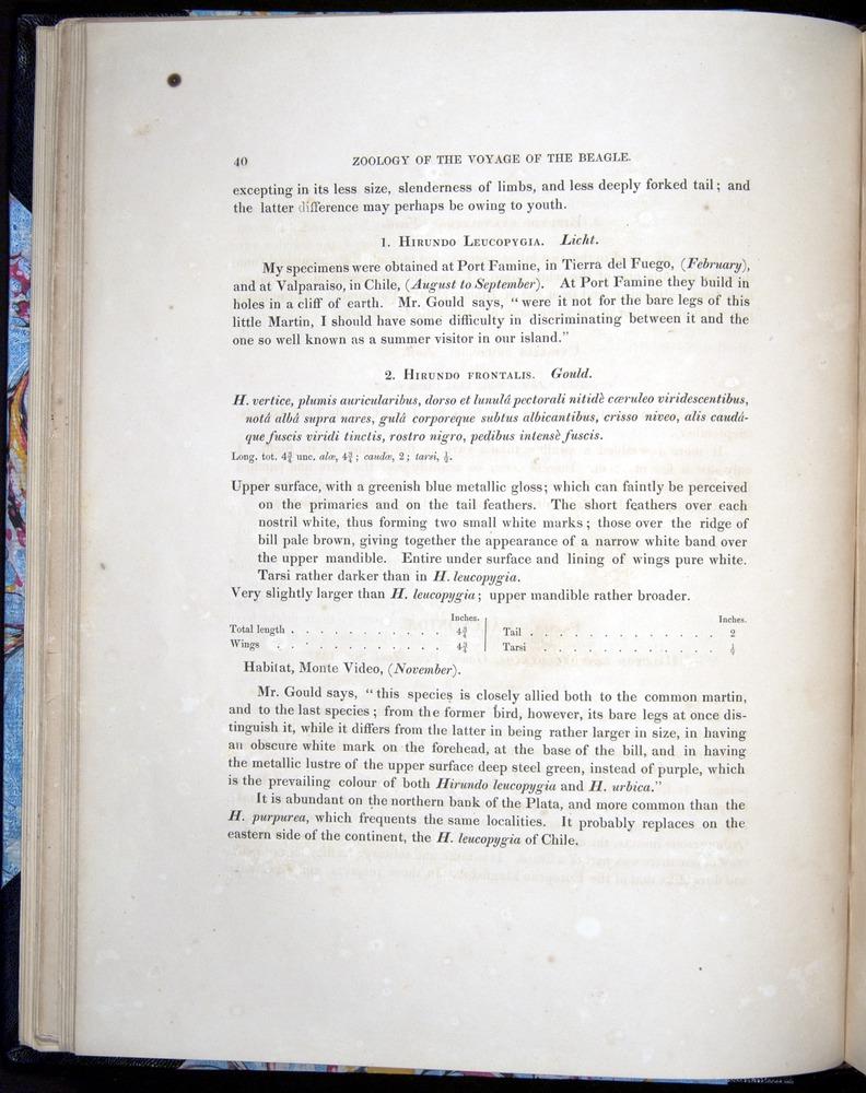 Image of Darwin-F8.2-1838-00040