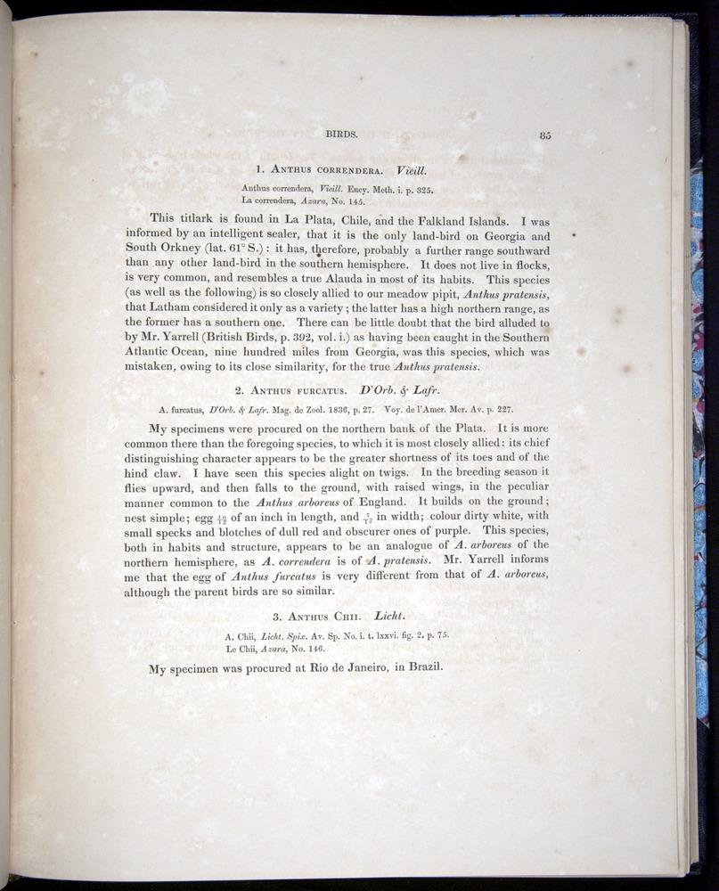 Image of Darwin-F8.2-1838-00085