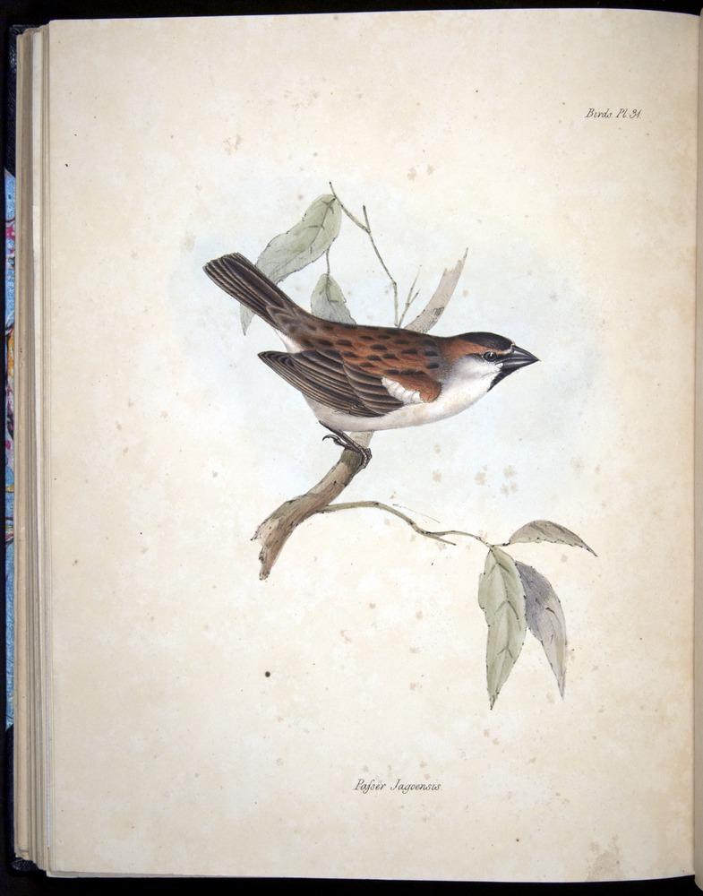 Image of Darwin-F8.2-1838-00090-cf31
