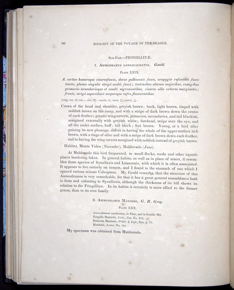 Image of Darwin-F8.2-1838-00090