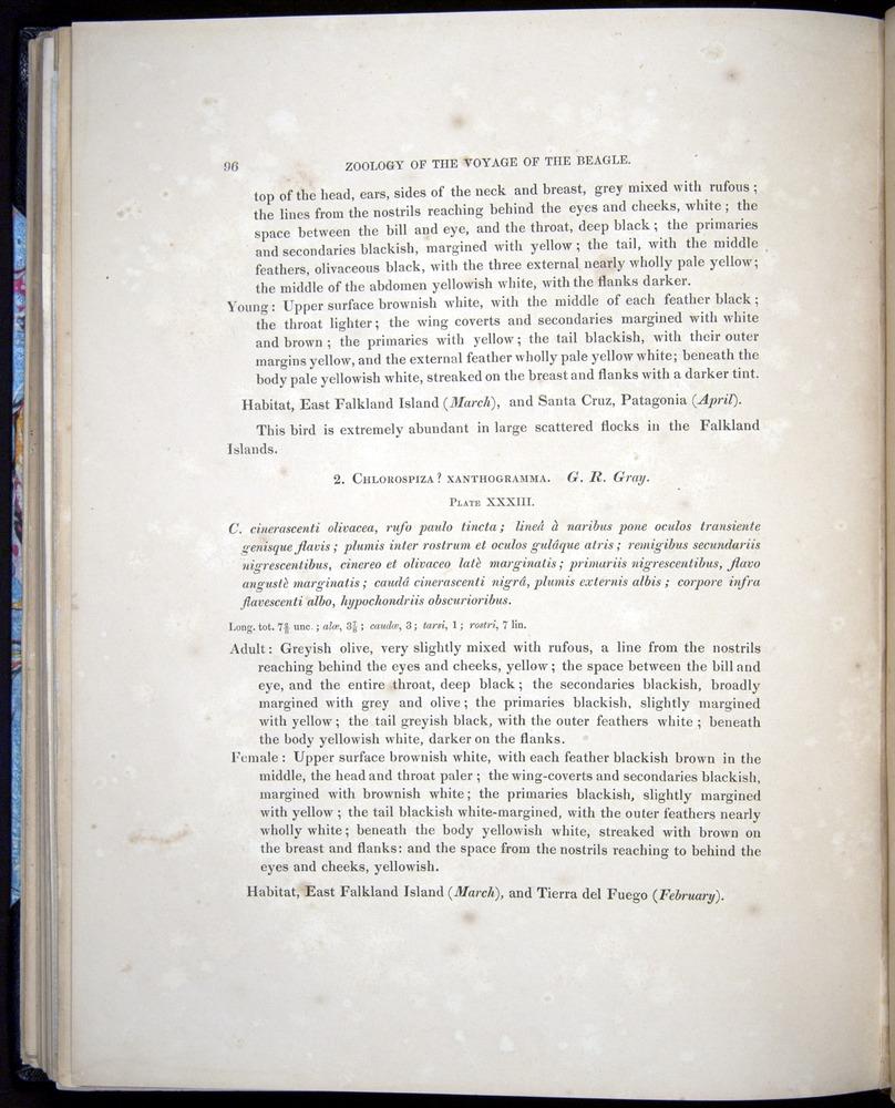 Image of Darwin-F8.2-1838-00092