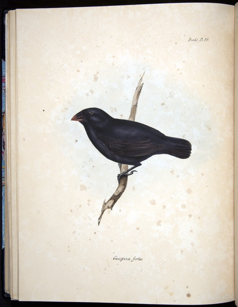 Image of Darwin-F8.2-1838-00100-cf38